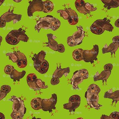 eco owls