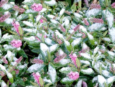 Snow Flowers Mini