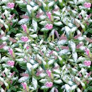 Snow Flowers Mini