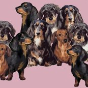 R856174_rdachshund_grouping_shop_thumb