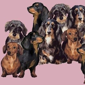 Dachshunds fabric