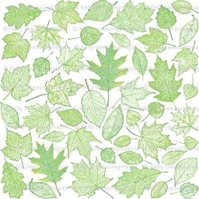 leaf etchings in green