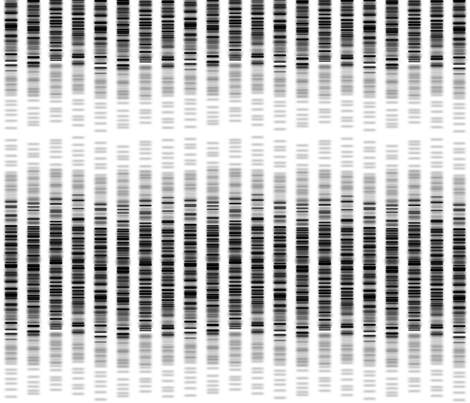 DNA_Blueprint_Rockstar fabric by tina_fab on Spoonflower - custom fabric