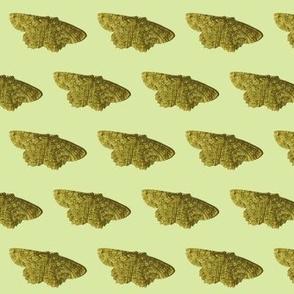 green moth