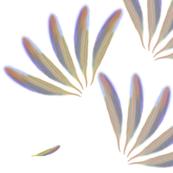 Feathers-Blythe Ayne