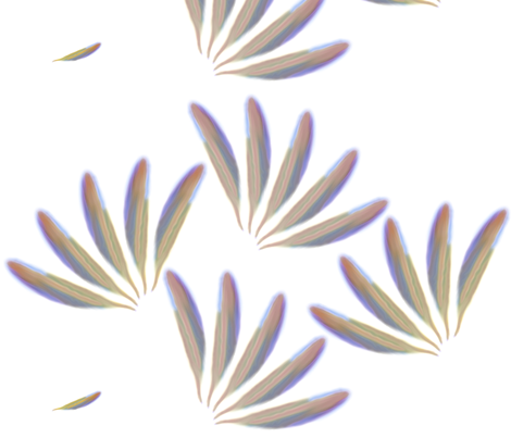 Feathers - Blythe Ayne fabric by blythe's_fabric_boutique on Spoonflower - custom fabric