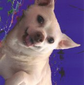 Rrrpeanutfabric7_shop_thumb