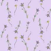 Rrlavender_purple_flowers_shop_thumb