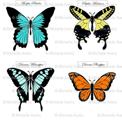 butterfly_collection