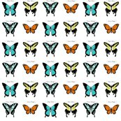 Rrbutterfly_collection_v4-01_shop_thumb