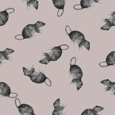 rats on pink
