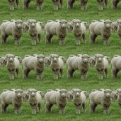 Rrrtwo-sheep_shop_thumb