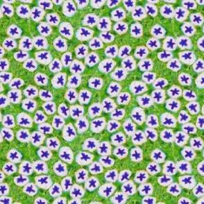 Cellular Petunia