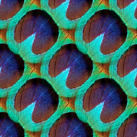 Wee Wee Eye of The Peacock fabric by peacoquettedesigns on Spoonflower - custom fabric