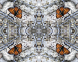 Rrrgrand_cyn_butterfly_thumb