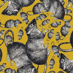 Rats on yellow background
