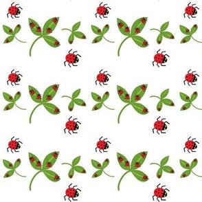 Ladybugs, ladybugs!