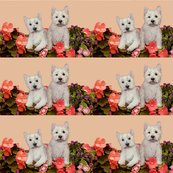 Rrrrwesties_in_the_garden_shop_thumb