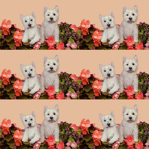 West Highland white terriers_in_the_garden