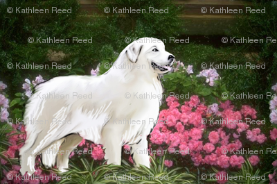 Great Pyrenees In The Garden
