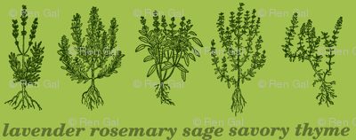 Evergreen Herbs - lavender, rosemary, sage, savory, thyme