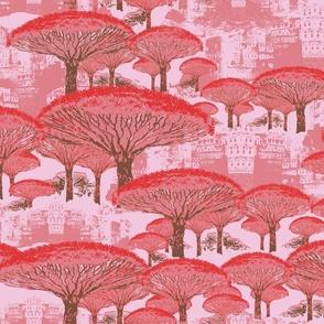 Socotra Dragon Trees; Old Blush