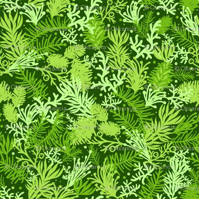 Fluffy Evergreens