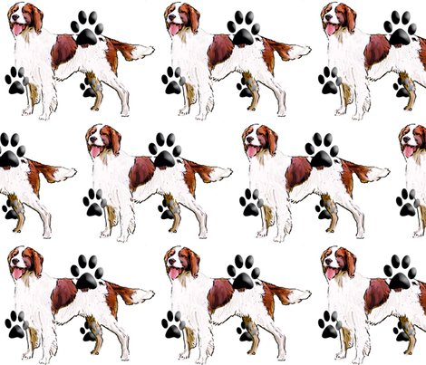 Rrrrred_and_white_setter_shop_preview