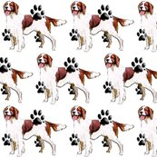 Rrrrred_and_white_setter_shop_thumb