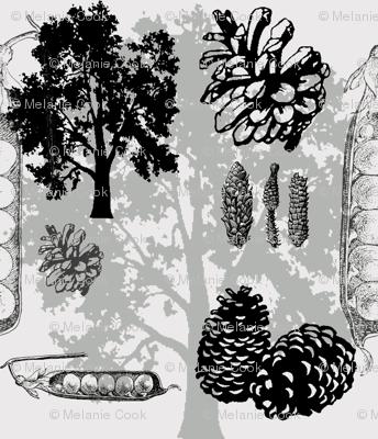 evergreens - greys