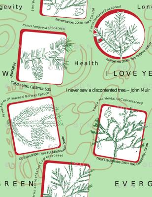 Evergreen I love Yew