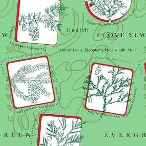 evergreen...