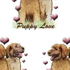 Puppy Love briard puppy