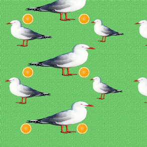 seagulls_oranges