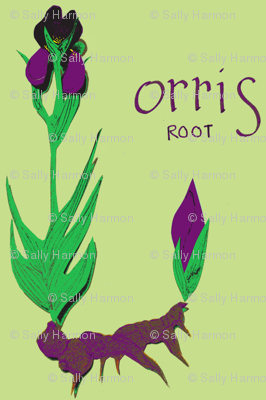 Orris Root