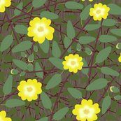 Rbuttercup_bush_2_shop_thumb