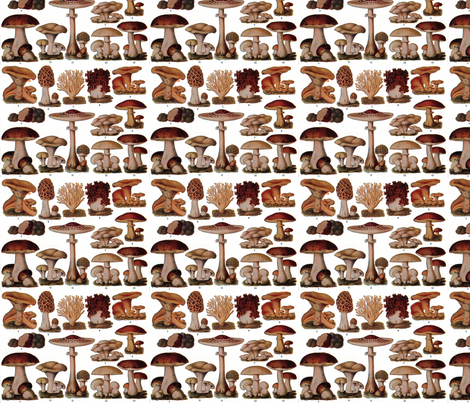 Vintage Mushroom Botanical fabric by theupstartstudio on Spoonflower - custom fabric