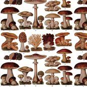 Redible_fungi1-1000x758_shop_thumb