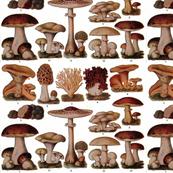 Vintage Mushroom Botanical