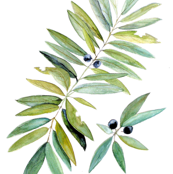 Leaves and Berry