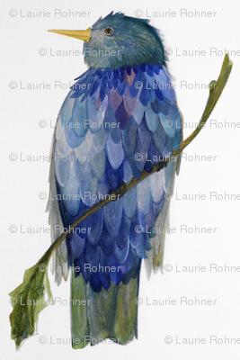Blue Bird on Branch