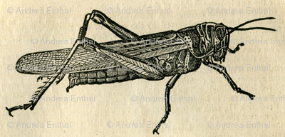 A Plague of Giant Locust on checked background