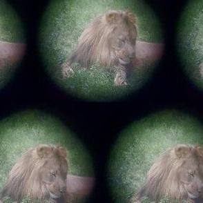 Spotting a Lion