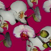 Orchid Ewe Knot Fuchsia