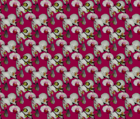 Orchid Ewe Knot Fuchsia  fabric by peacoquettedesigns on Spoonflower - custom fabric