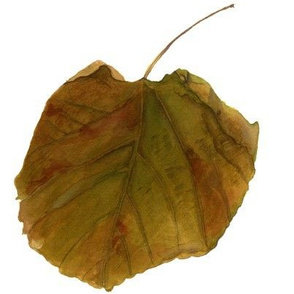 fall watercolor leaf