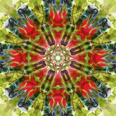 Multicolor Turmaline red