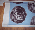 R930545_rnewfoundland_dog_portrait3_comment_137621_thumb