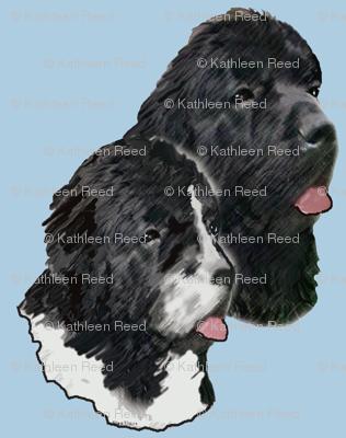 Newfoundland_Dog_Portraits