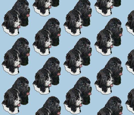 R930545_rnewfoundland_dog_portrait3_shop_preview